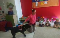 Dogoterapia – terapia zudziałem psa