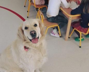 Zajęcia zpsim terapeutą/Dog therapist classes :)