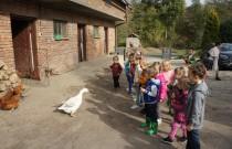 Gwiazdki i Żabki – Spotkanie ze zwierzątkami