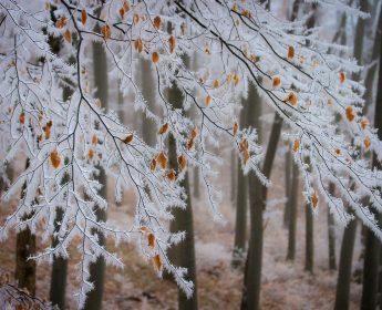 Pierwszy Dzień Zimy