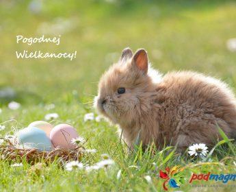 Wesołych Świąt Wielkanocnych 🐣🐰🥚