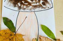 Grzyby- Sówki/ mushrooms
