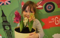 Gwiazdeczki – Nasze hiacynty /Stars – Our hyacinths/