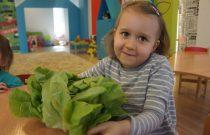 Gwiazdeczki – Nowalijki /Stars – Spring vegetable/
