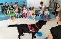 Jeżyki i Motylki- Zajęcia  z dogoterapii /Hedgehogs & Butterflies – A dog-therapy workshop/