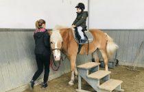 Żabki – Konie / Frogs – Horse riding