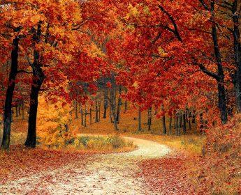 First Day of Autumn / Pierwszy Dzień Jesieni